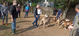 Wychowankowie w zagrodzie z kozami