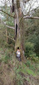 Wychowanek w środku drzewa